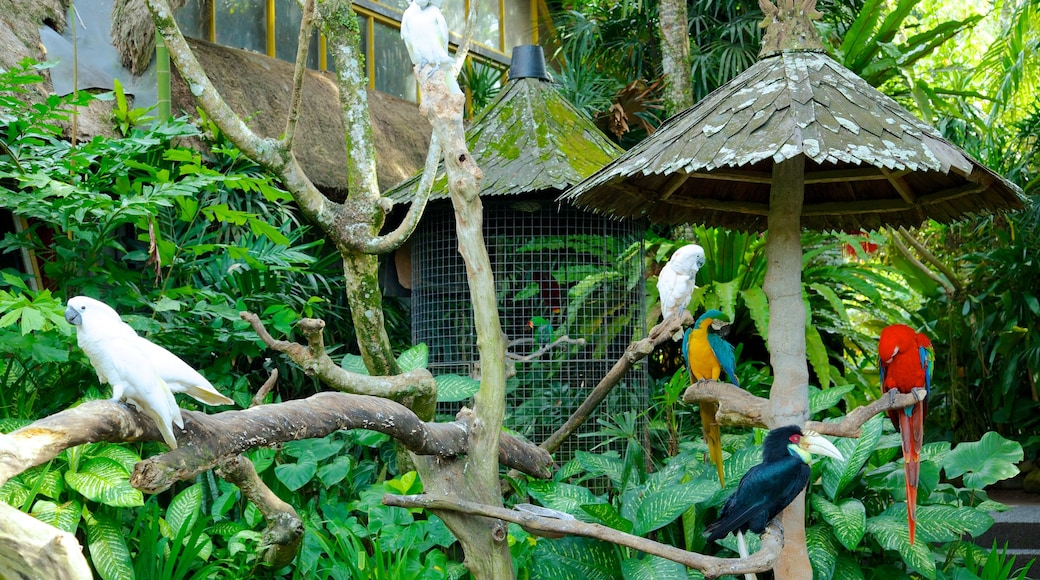 Don Antonio Blanco Museum showing zoo animals and bird life