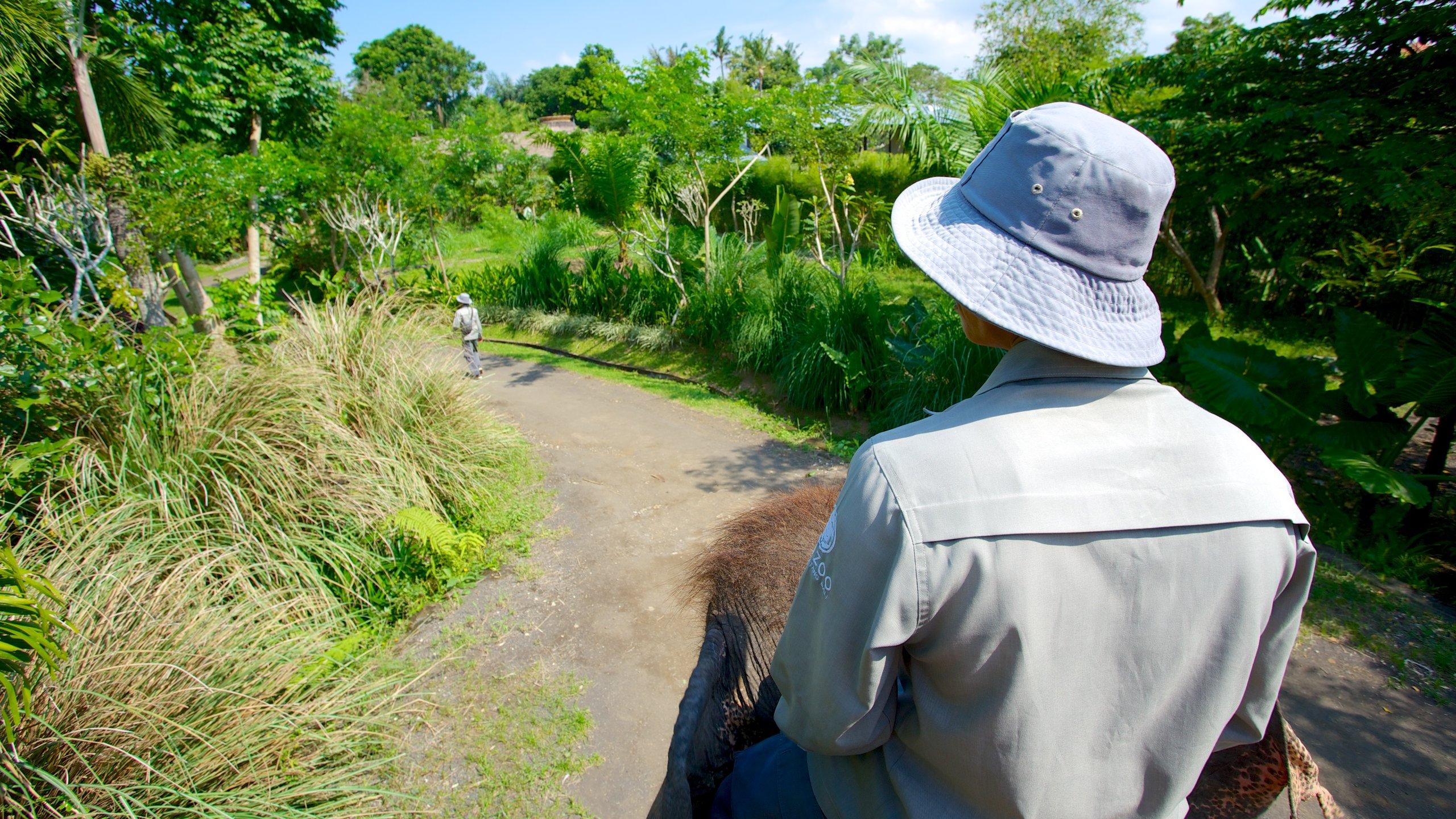 Lihat hewan eksotis dan asli yang menjadikan Kebun Binatang Bali sebagai rumahnya selama perjalanan Anda ke Sukawati. Luangkan waktu untuk mengunjungi spa area ini, atau cukup nikmati restoran pemenang penghargaan.