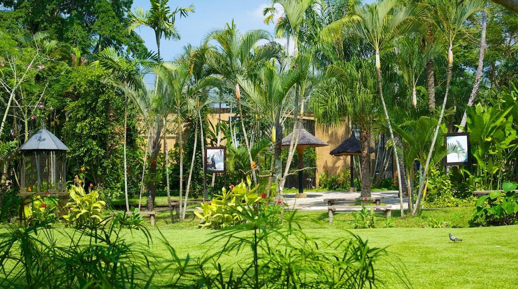 Bali Bird Park showing a garden and tropical scenes