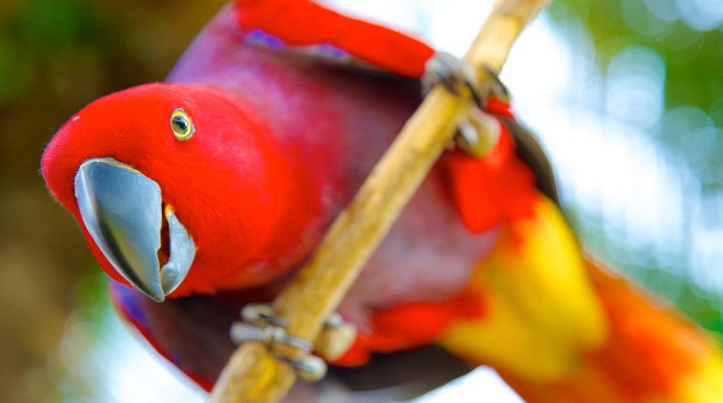 Bali Bird Park showing zoo animals and bird life