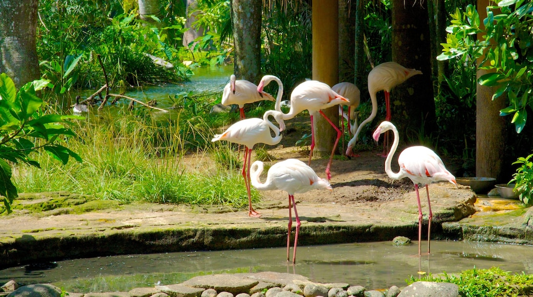 Bali Bird Park which includes a pond, a garden and zoo animals