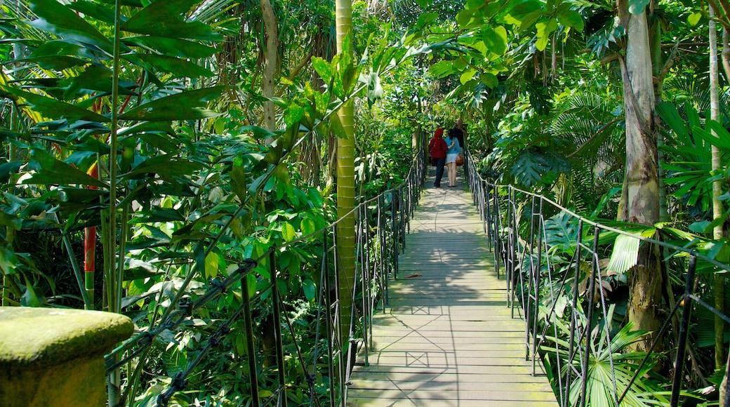Bali Bird Park which includes a bridge and a park
