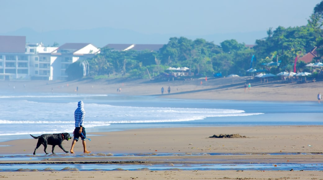 Seminyak showing a beach and cuddly or friendly animals as well as an individual male