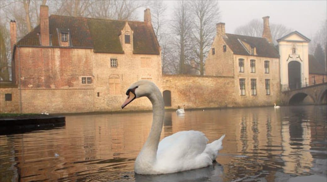 Begijnhof montrant vie des oiseaux, rivière ou ruisseau et petite ville ou village