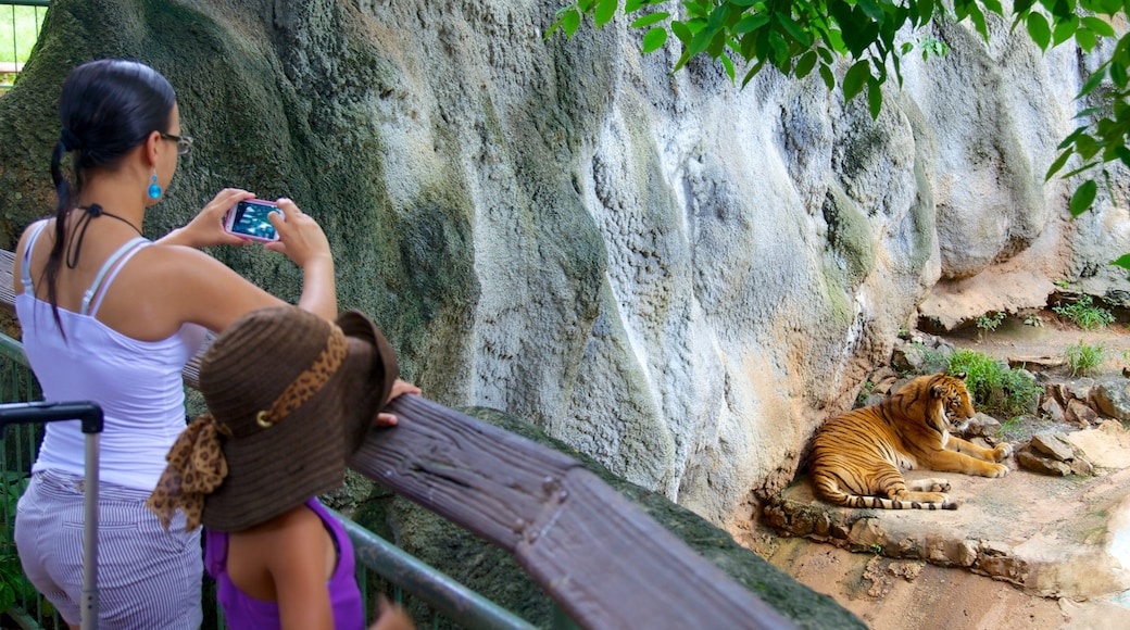 Mayaguez Zoo featuring dangerous animals and zoo animals as well as a family
