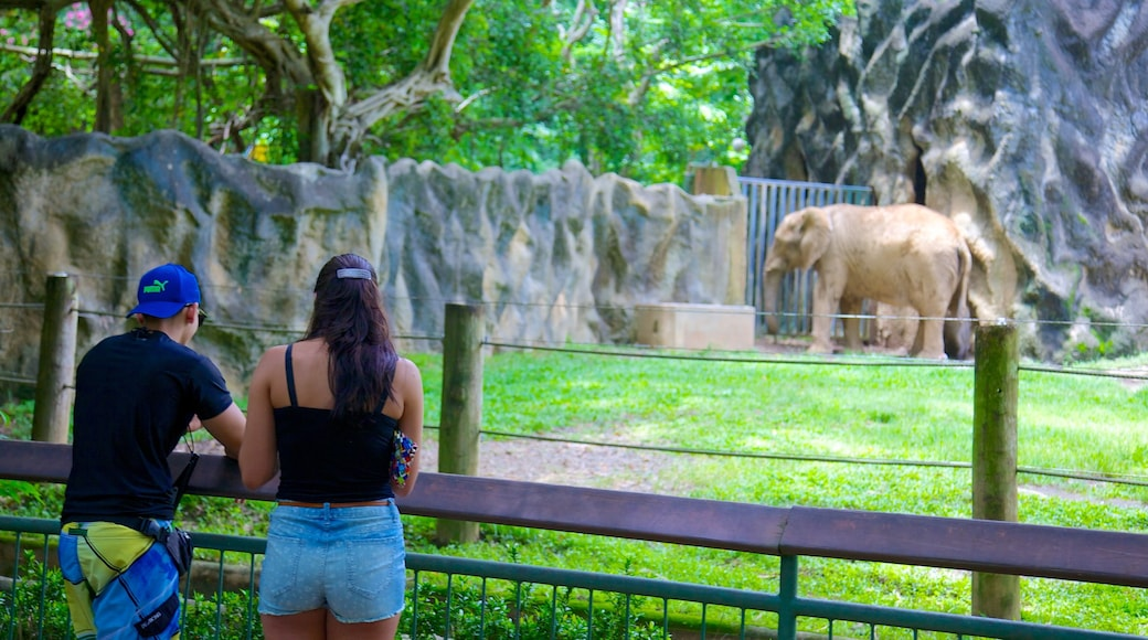 Mayaguez Zoo featuring zoo animals and land animals as well as a couple
