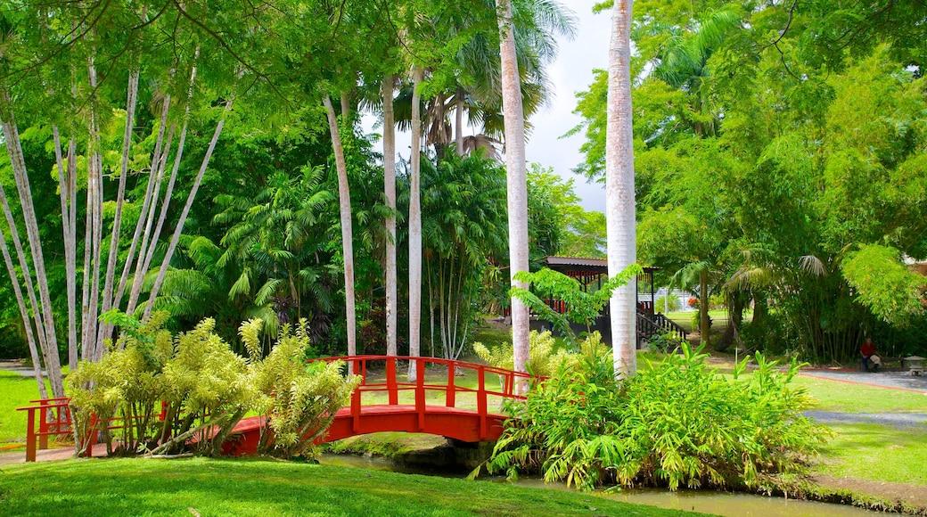Jardin Botanico mostrando um parque, cenas tropicais e uma ponte