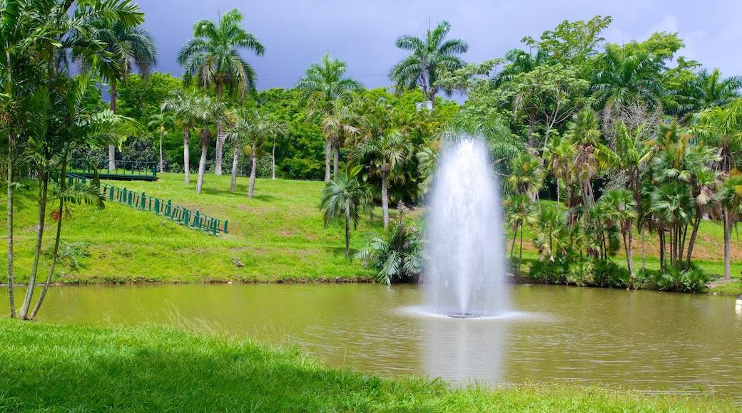 Jardin Botanico que inclui uma fonte, um lago e um parque