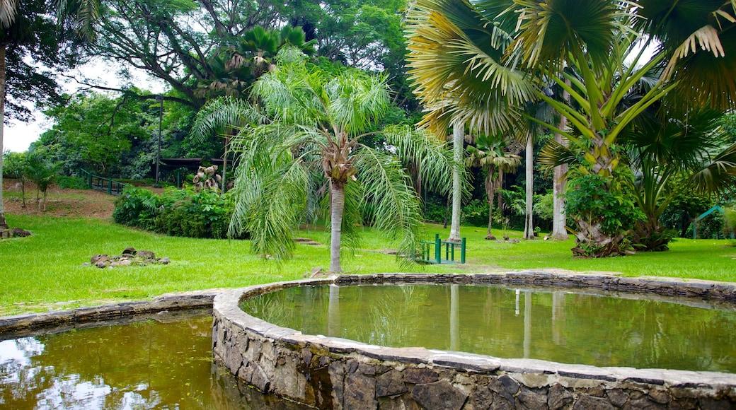 Jardin Botanico caracterizando um lago, um jardim e cenas tropicais