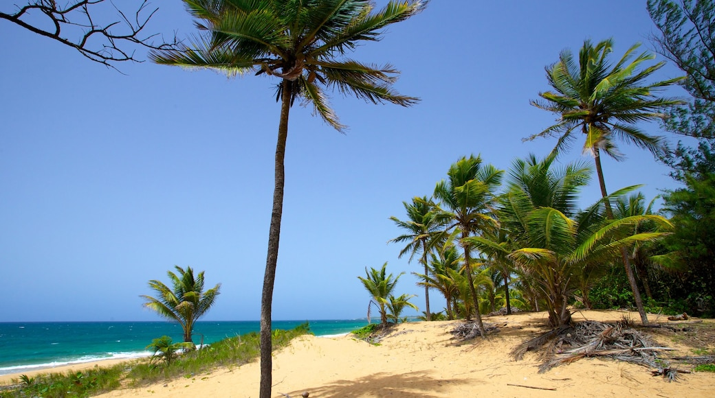 Puerto Rico featuring a beach and tropical scenes