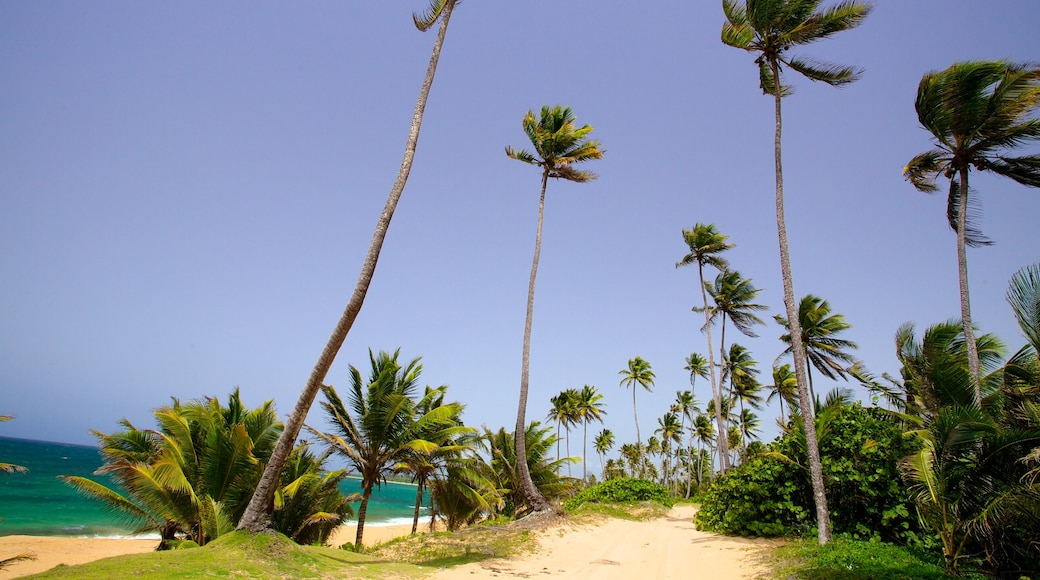 Puerto Rico showing a beach and tropical scenes