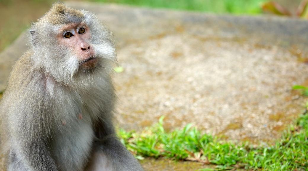 Lombok showing animals
