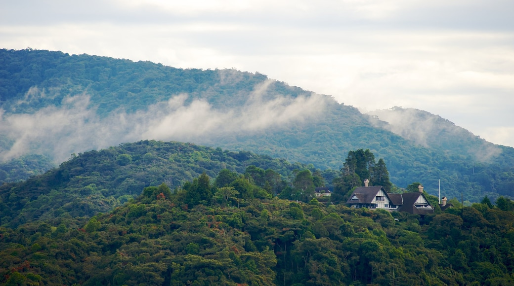 Cameron Highlands showing mountains, forests and mist or fog