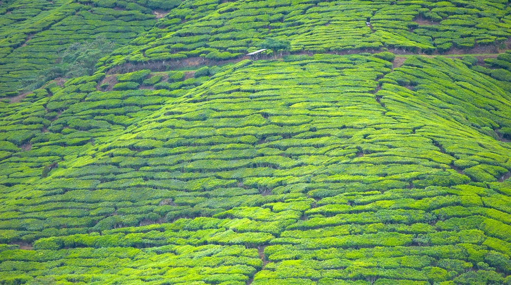 Cameron Highlands featuring landscape views and farmland