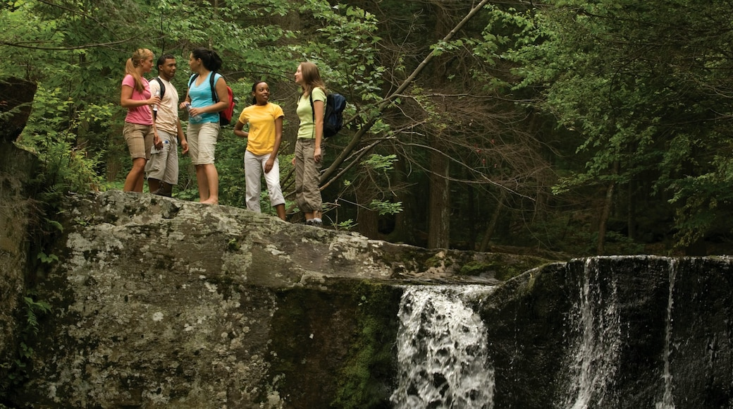Pocono Mountains featuring a cascade, forests and hiking or walking