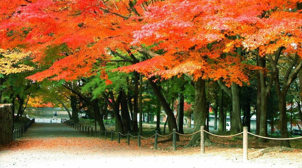南禪寺 设有 花園, 秋色 和 森林風景