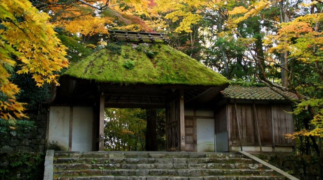 Honen-in Temple showing a temple or place of worship, religious aspects and autumn leaves