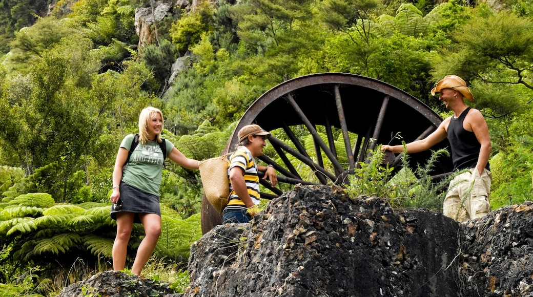 Karangahake Gorge featuring hiking or walking and forests as well as a family