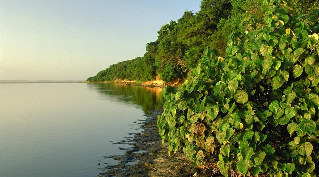 St. Lucia Wetland Heritage Park and Estuary welches beinhaltet Sumpfgebiet