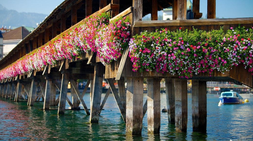 Pont de Lucerne qui includes fleurs, navigation et rivière ou ruisseau