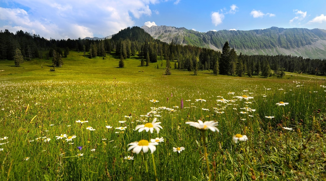 Lucerne showing tranquil scenes, wild flowers and landscape views