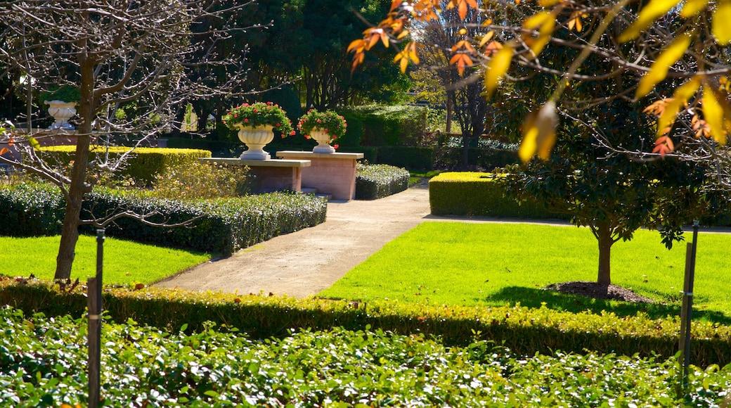 Hunter Valley Gardens showing a garden