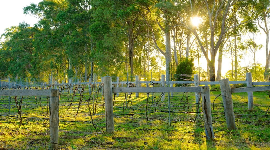 Saddlers Creek Wines showing a garden and farmland