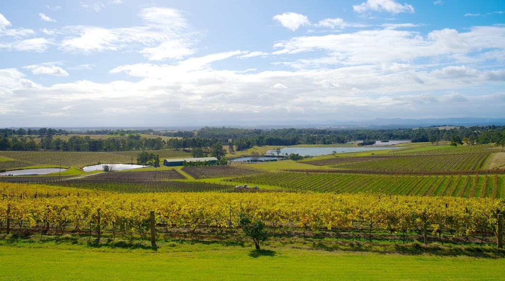 Audrey Wilkinson Winery featuring farmland and landscape views