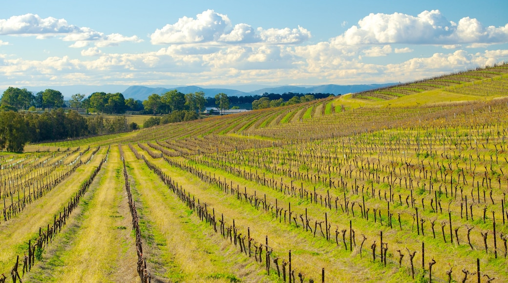 Pokolbin featuring landscape views and farmland