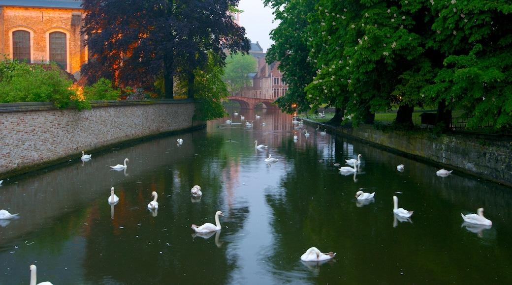 Minnewater bevat een rivier of beek, vogels en een klein stadje of dorpje