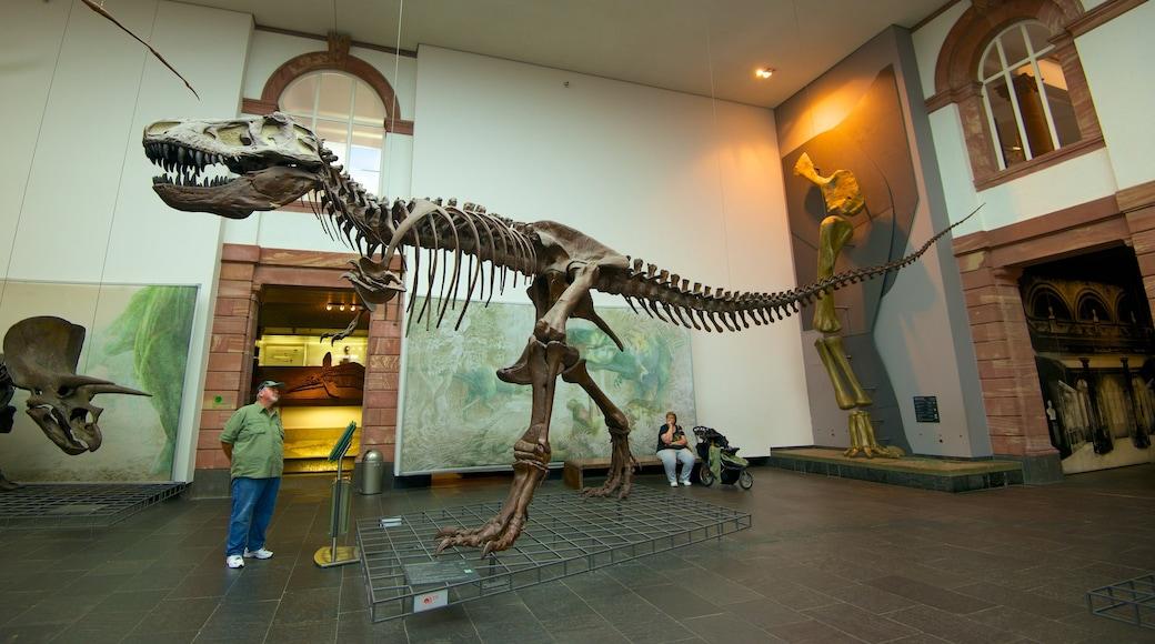 Naturmuseum Senckenberg mit einem Innenansichten sowie einzelner Mann