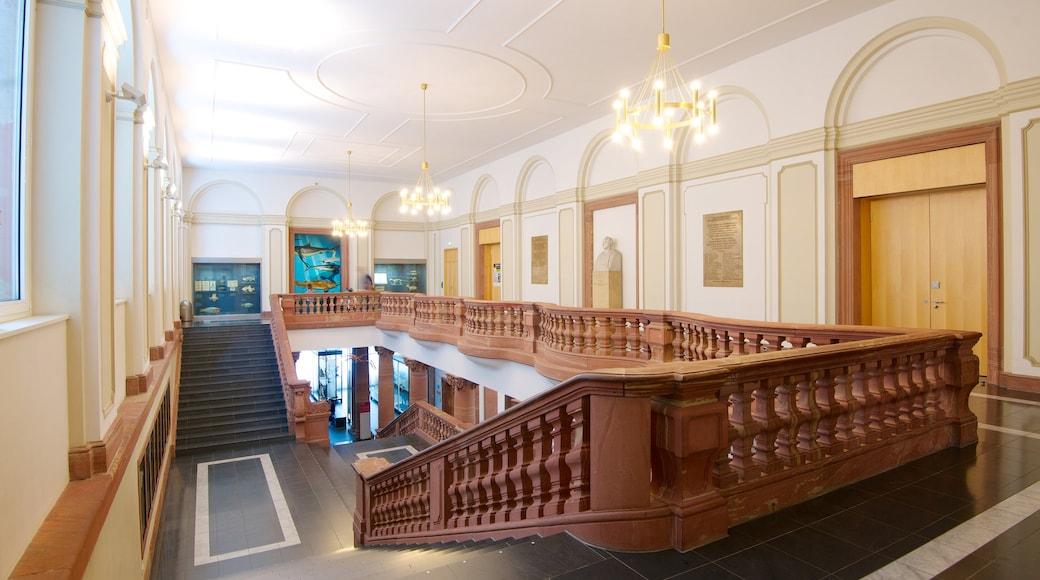 Naturmuseum Senckenberg das einen Innenansichten