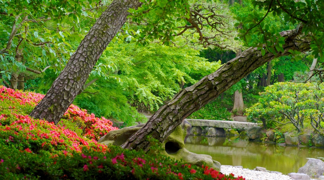 Tennoji Park showing a pond, wild flowers and flowers