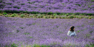 Nakafurano showing wildflowers as well as an individual femail