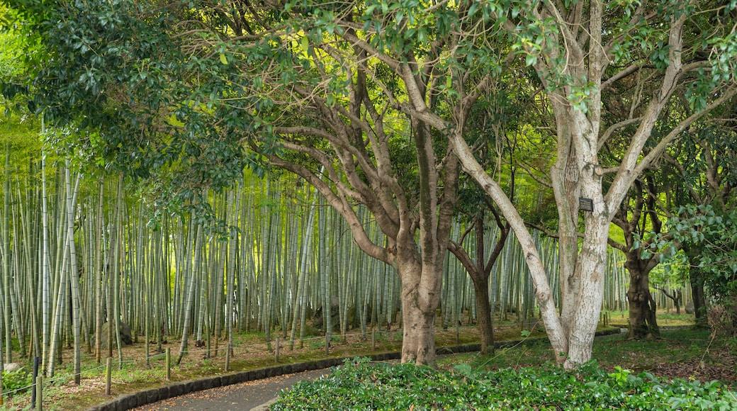 Beppu park