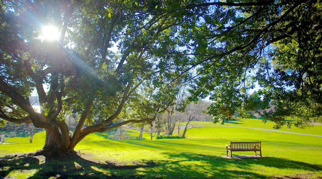 Royal Tasmanian Botanical Gardens showing a park