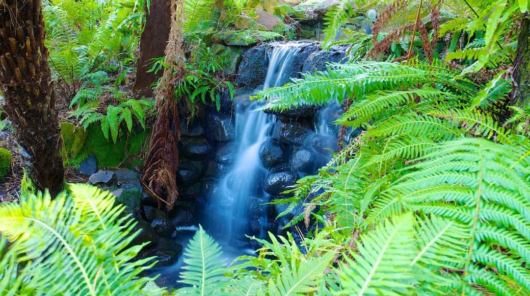 Royal Tasmanian Botanical Gardens showing a cascade and rainforest