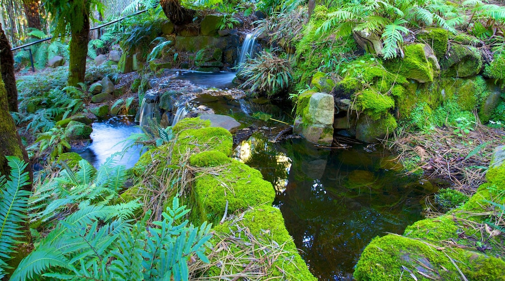 Royal Tasmanian Botanical Gardens which includes a garden, a river or creek and rainforest