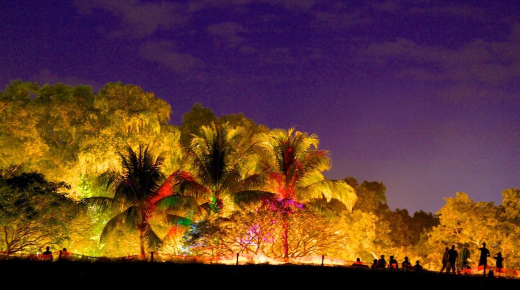 Mindil Beach showing night scenes and tropical scenes