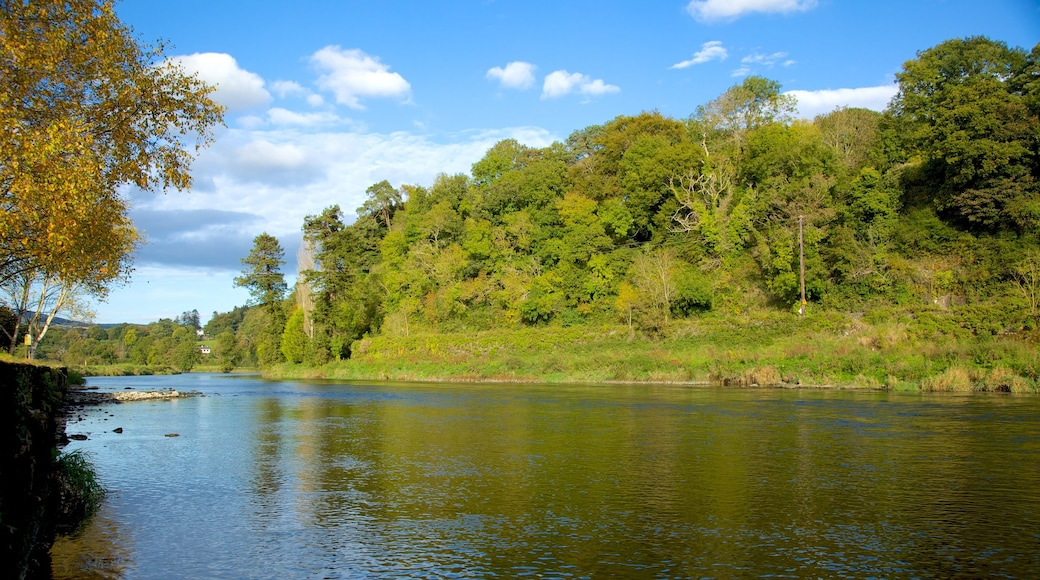 Kilkenny showing forest scenes, a river or creek and landscape views
