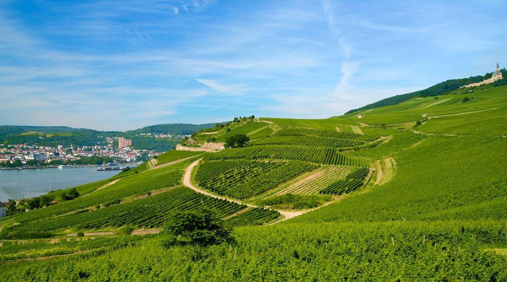 Rheingau Wine Region which includes farmland, tranquil scenes and landscape views