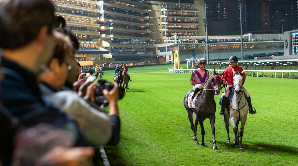 Happy Valley Race Course which includes land animals, horseriding and a sporting event