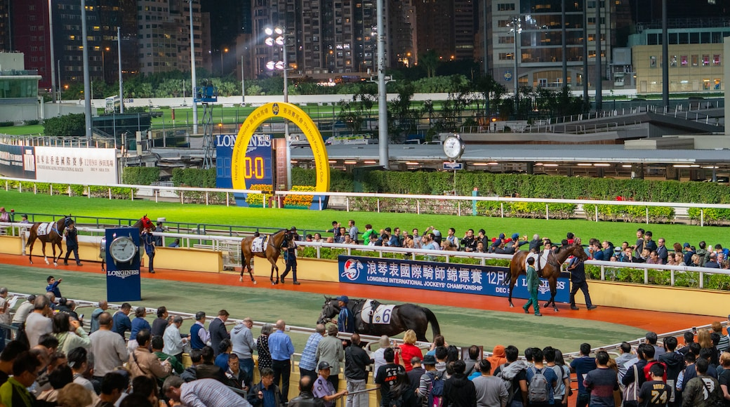 Happy Valley Race Course showing night scenes, horseriding and land animals