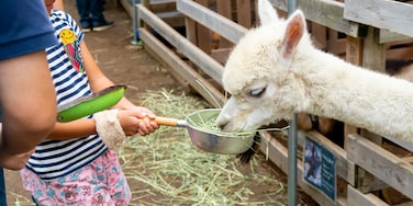 Chiba Zoological Park featuring zoo animals and cuddly or friendly animals as well as an individual child