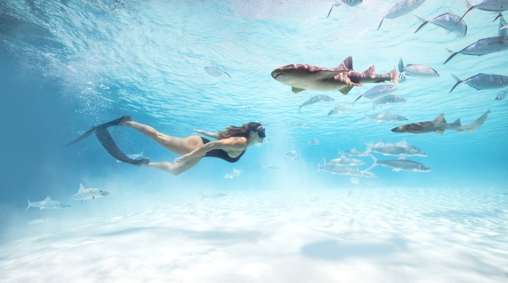 Exuma which includes snorkeling, tropical scenes and general coastal views