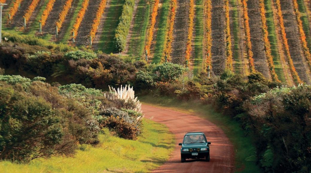Waiheke Island featuring farmland
