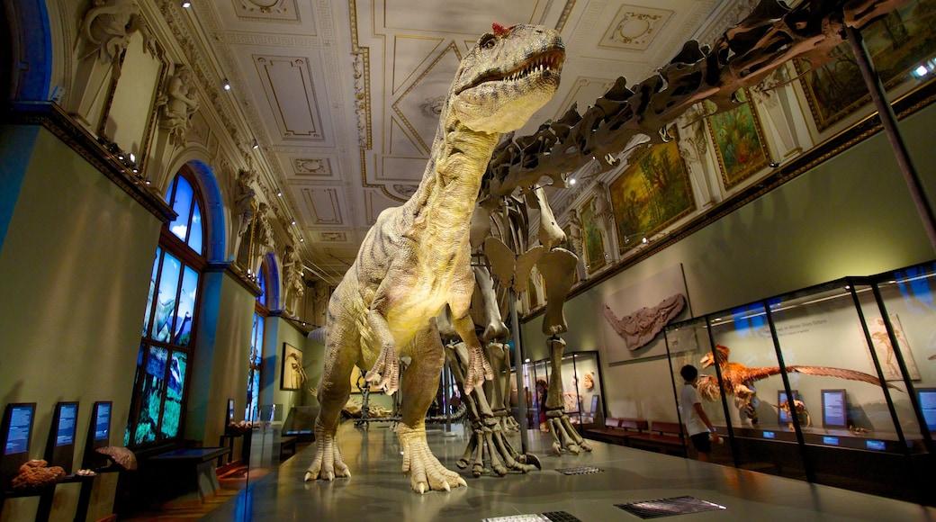 Museu de História Natural inclusief interieur