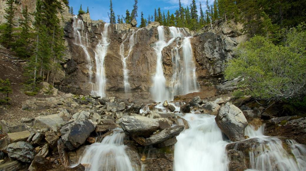 Tangle Falls featuring a cascade