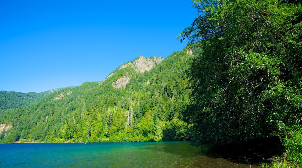 Olympic National Park showing landscape views, forest scenes and mountains