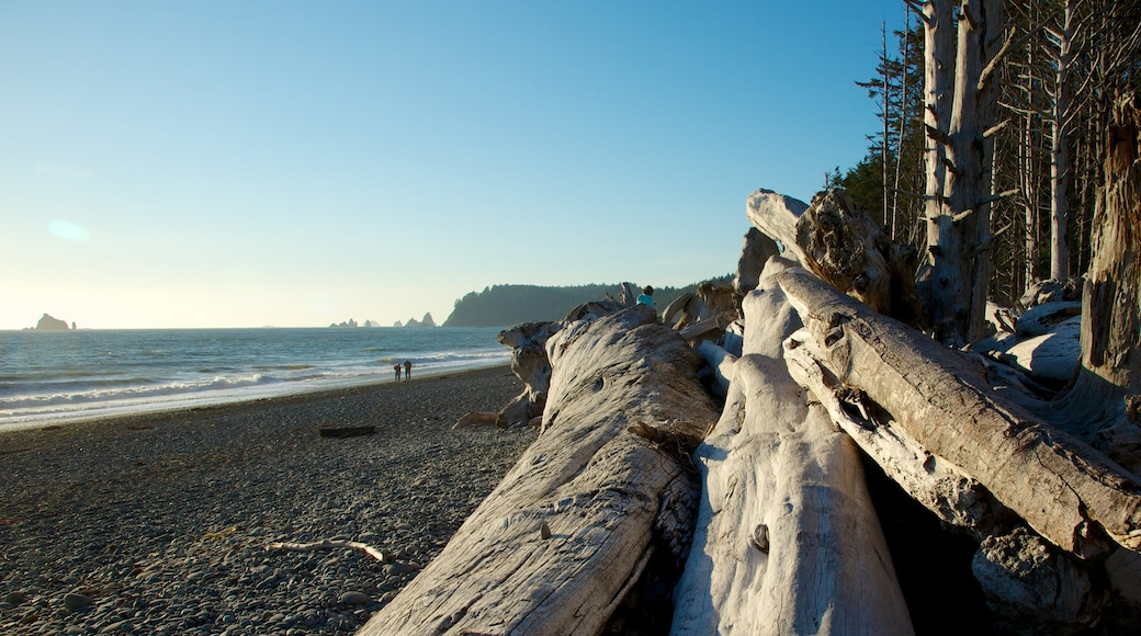 Rialto Beach joka esittää kivinen ranta, yleiset rantanäkymät ja maisemat